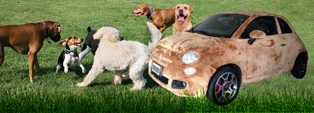 060915 CC Wrapped in fun – it's a furry FIAT 4