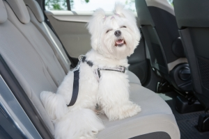 081716 CC Don't forget Fido on your next family trip 3
